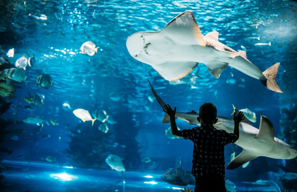 Zoos and aquariums are important beyond the enjoyment they bring to people.